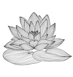 Decorative lotus vector