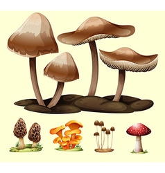 Different kind of mushrooms vector image