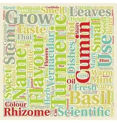 Spices turmeric cumin mint and sweet basil text vector