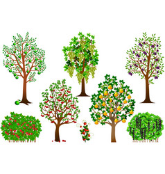trees and shrubs vector image