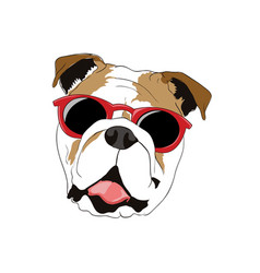 bull dog wearing sunglasses vector image