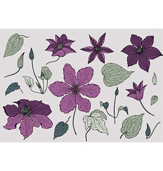 Set of hand drawn beautiful clematis flowers vector