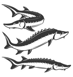 Set of sturgeon icons isolated on white background vector