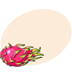 Whole unpeeled uncut dragon fruit in horizontal vector