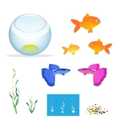 Isometric Aquarium with fishes algae and vector image
