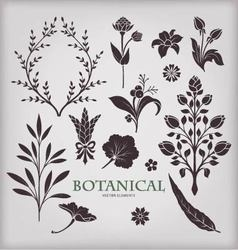 Botanical elements vector