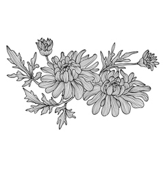 Decorative chrysanthemum vector