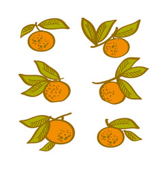 orange hand drawn element tangerine citrus vector image