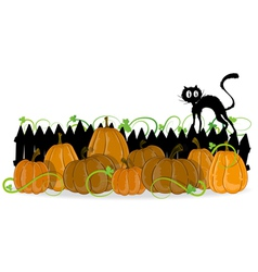 Pumpkins and black cat vector