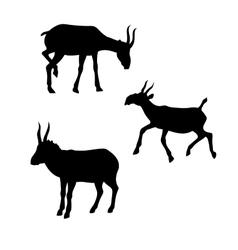Saiga silhouettes vector image vector image