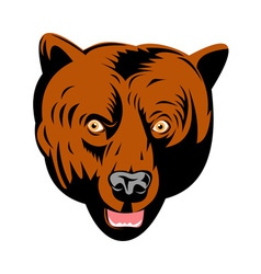 Grizzly brown bear head facing front vector