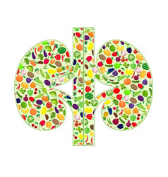 Kidneys healthy silhouette vector