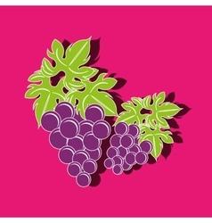 grapes icon design vector image