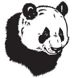 head of panda bear vector image vector image