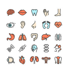 human organs color thin line icon set vector image vector image