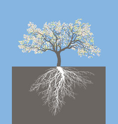 Apple tree in spring with roots vector