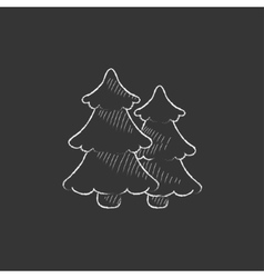 Pine trees Drawn in chalk icon vector image