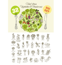 Big set of hand drawn vegetables vector