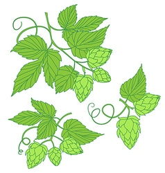 Hops icon or logo ideal for beer stout a vector
