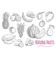 Sweet fresh fruits isolated sketches vector