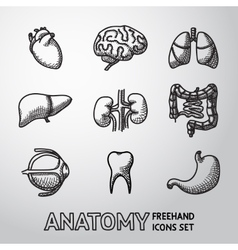 Internal human organs handdrawn icons set with - vector