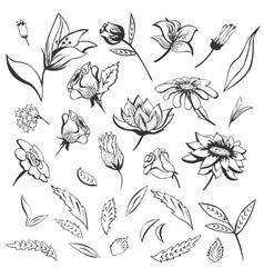 Sketch Flowers Set vector image vector image