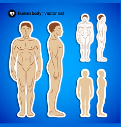 Human body set vector