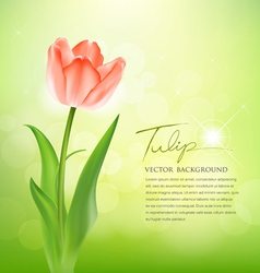 Beautiful tulips on nature vector image