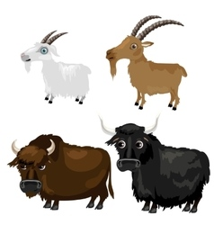 Two breeds goats and buffalo on white background vector