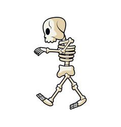 cartoon skeleton bones mystery fairy tale vector image vector image