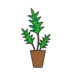 colorful nature plant with leaves inside flowerpot vector image vector image