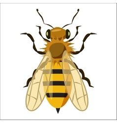 Insects bee icon cartoon style vector
