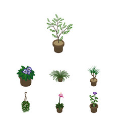 Isometric houseplant set of fern houseplant vector