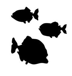 Piranha fish silhouettes vector image vector image