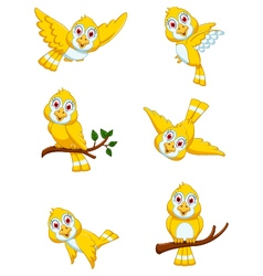 set of yellow bird cartoon posing vector image