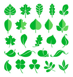 Growing plants leaf and grass shoots vector