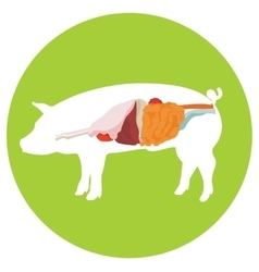 Pig anatomy digestive system vector