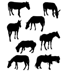 Collection of silhouettes of horses vector image