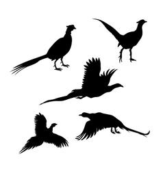 Bird pheasant silhouettes vector