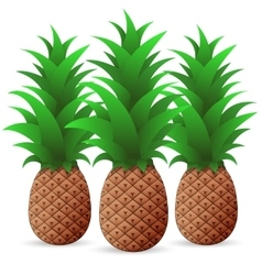 Bright color Pineapple vector image vector image