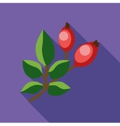 Rosehip branch with red berries icon flat style vector