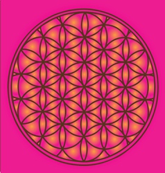 Sacred geometry flower of life symbol vector