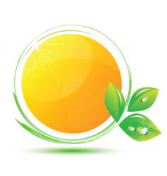 eco orange vector image