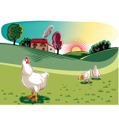 Free hens in a meadow at dawn vector