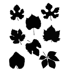 grape leaf vector image vector image
