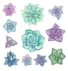 Watercolor succulent set on white background vector image vector image