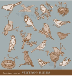 Hand drawn set birds vector image vector image