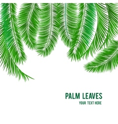 Tropical palm tree background banner vector
