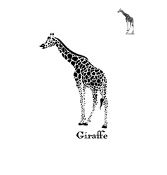 Giraffe logo wild animal vector
