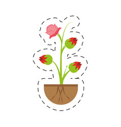 Pink rose flower sprout grow vector